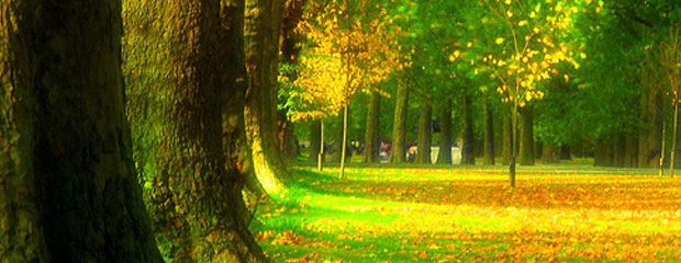 Palko Plant - Parkok fenntartása