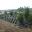 Moonvalley Borászat tetőkert építése parképítéssel, öntözőrendszer telepítése, Mád, 2013